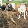ARIES (puppy)_00010