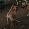 Bear (girl), Gracie (pup)_00019