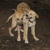 Bear (girl), Gracie (pup)_00012