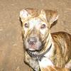 ARIES (pup)_00002