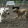 Bailey (younger), Gracie, Blackjack 2_00009