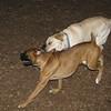Rocco (new boxer), Viv_00001