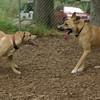 Gracie (pup), Bear (girl)_00003