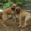 Gracie (pup), Bear (girl)_00001