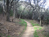 Los Pinetos trail