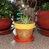 Zebra Pllant (Haworthia attenuata) in a hedgehog pot