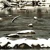 December on the Kootenai River