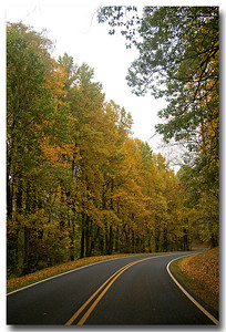There weren't many cars on the road because of the weather, so I was able to run out in the middle and get plenty of shots like this.  The leaves were perfect