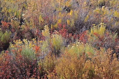 Calf Creek - Fall grasses - Grand Staircase of the Escalante, Utah