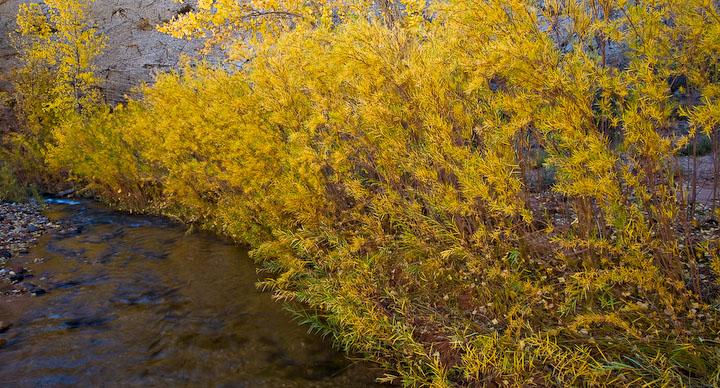 Capitol Reef NM - Pleasant Creek Tamarisk - Oct 2008, Utah
