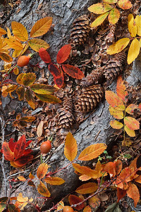 Fall forest floor detail in Wild Basin, Rocky Mtn National Park, CO