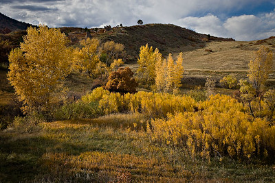 Cottonwoods - Fountain Valley - Fall 2008