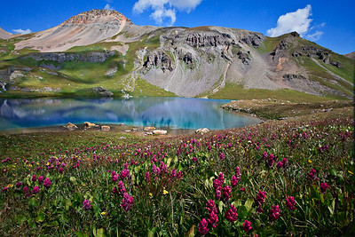 Ice Lake Blues - late August wildflower bloom San Juan Mountains, Colorado