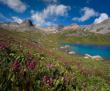 Ice Lake Wildflowers Late August, 2008 3 vertical image stitch + focus blend San Juan Mountains, Colorado