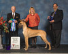 Sunday Best of Winners, WInners Bitch & Best Puppy