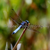 dragonfly oke 908