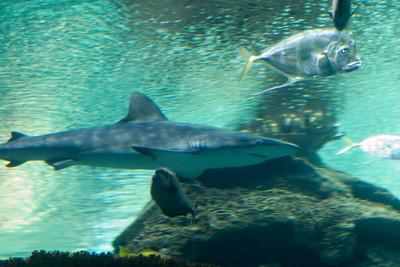 Sharks at Mandolay Bay!