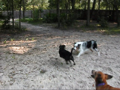 Daycare Dogs' Field Trip to Poochie's Dog Park