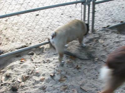 Outback Chris Investigates: Dangerous Bulldogs, Part II