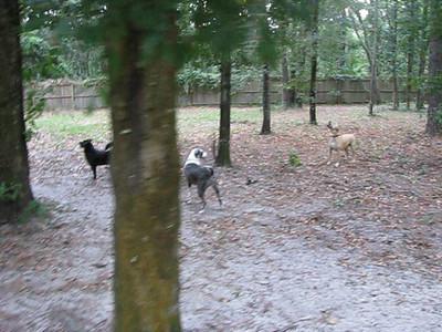 Squirrel Hunting