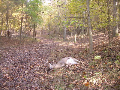 2008 Whitetails