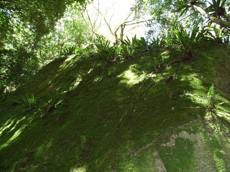 Torsten's Rock Garden