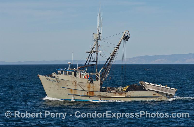 vessel squid seiner Ferringo Boy Loligo 2008 01-02 SB Channel--1015