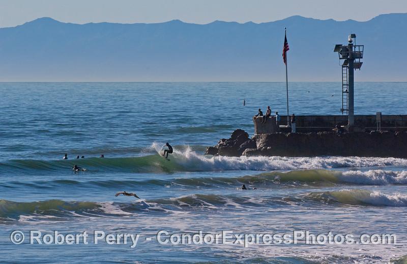 surfers sandspit 2008 01-13 SB Harbor -033