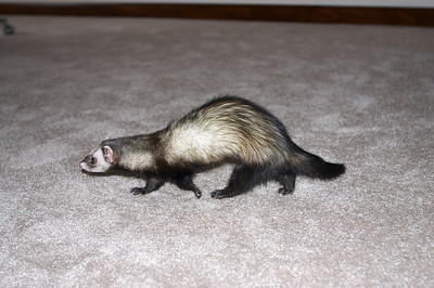 Leslie made the trip up to Sweetwater, TN to take her ferret to the vet, so the dropped by for a visit