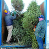 Citizen photo by David Mah Mac MacDonald, left, and Guy Storry from the Prince George Central Lions Club load Christmas trees into bins in front of the CN Centre during Sundays annual Christmas Tree Pickup.