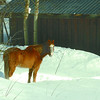 Citizen photo by David Mah A lone horse warms in the sun by his barn on Noranda Road Monday morning.
