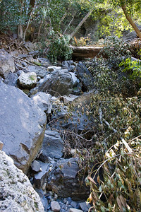 Going up to the upper step on the creek bed