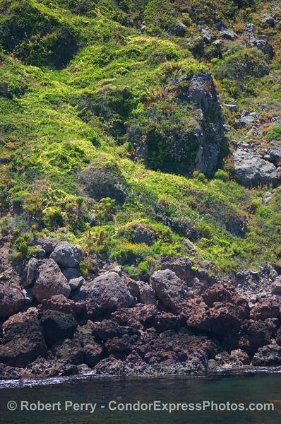 Green slopes 2008 05-26 Sta Cruz Island-1067