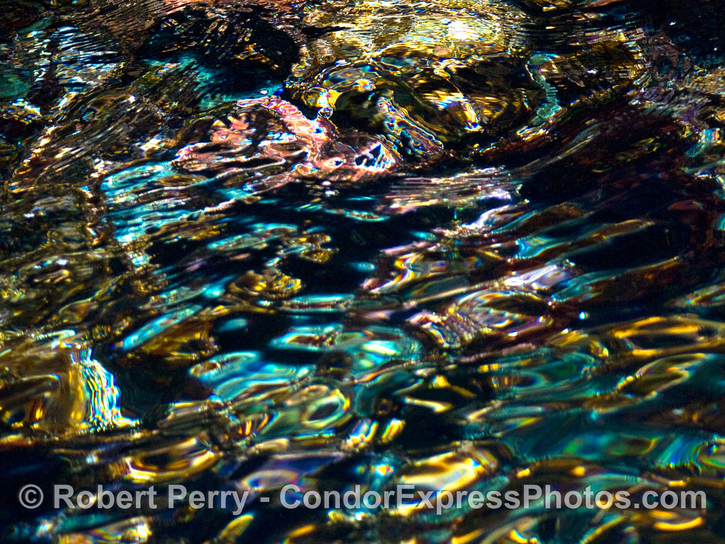 abstract low intertidal Painted Cave entrance wall 2008 05-26 Sta Cruz Island CROP