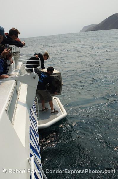 Zalophus rehab release SEQ 2008 06-25 SB Channel--390