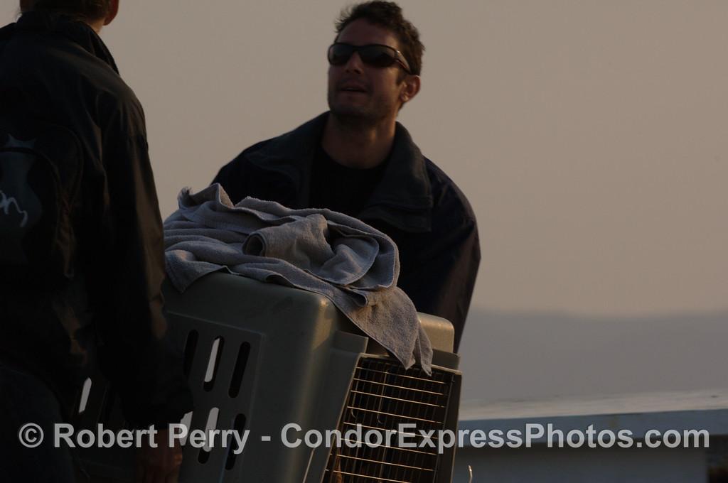 Zalophus rehab release SEQ 2008 06-25 SB Channel--059
