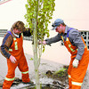 Citizen photo by David Mah City of Prince George arborists Bob Elmore, left, and Keith Stribrany plant a swedish aspen on Brunswick Street. 20 aspens and ashes will be planted downtown to improve visual appeal.