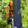 Citizen photo by David Mah TDB faller Wiley Kitt starts the backcut on a beetle-killed lodgepole pine in Forests For The World. Removal of dead pine is commencing now.