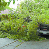Citizen photo by Brent Braaten Goldie and Lynn Nadfey woke up Thursday morning at their Pine Street home to find that an Elm tree had fallen over their three vehicles aned part of their house. Surprisingly there was very little damage to either the vehicles or the house.