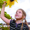 Citizen photo by David Mah Seven-year-old Oceana Seguin takes a close look at a sunflower growing in the Milburn Avenue Community Gardens. Despite a shortage of sun and hot weather the sunflowers are doing alright.