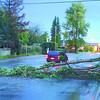 Citizen photo by Brent Braaten Motorists avoid a tree that fell down across three lanes of traffic on Winnipeg Street Thursday evening.