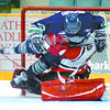 Citizen photo by Brent Braaten Prince George Cougars goalie Kevin Armstrong  was stopping everything Saturday night including seattle Thunderbird David Richard.