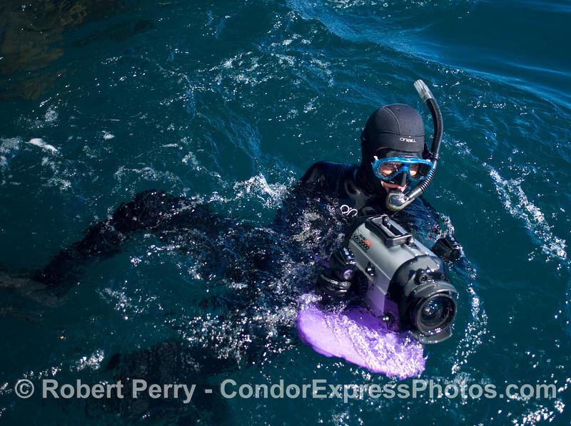 Jodi in water CIMWI Zalophus rehab release 2008 10-14 SB Channel - 036modCROP