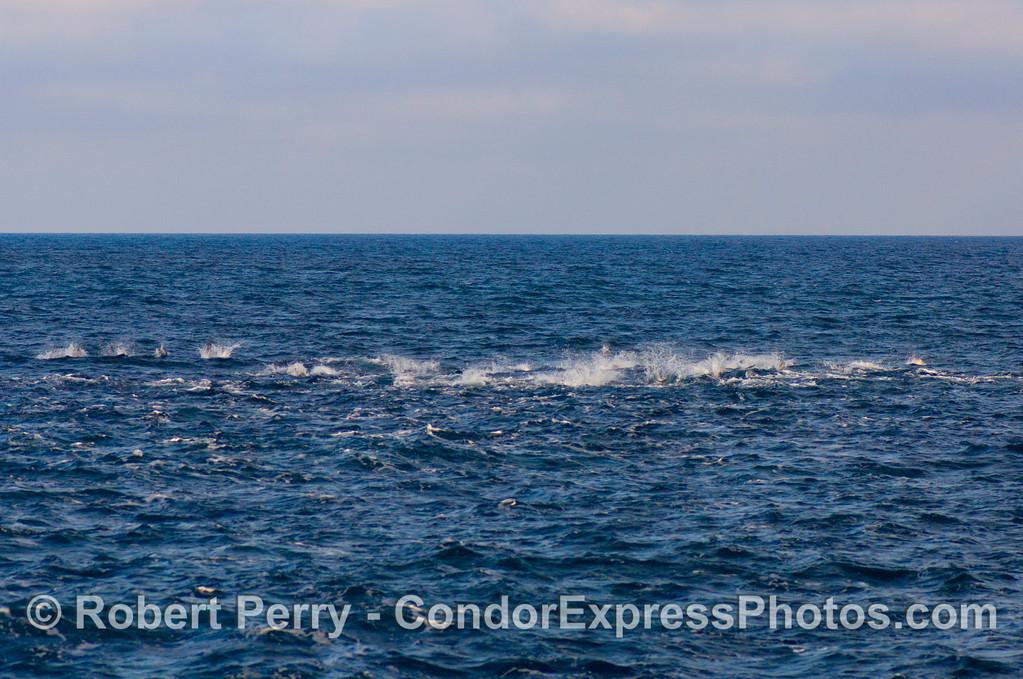 Delphinus LINE UP 2008 10-18 So Calif Bight - 405modROT