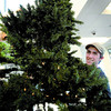 Citizen photo by Brent Braaten Sam Beliveau gets cughtup in the branches as he helps set up the 12 foot Christmas tree in the Showroom at Wood Wheaton Chevrolet Cadalac Hummer Tuesday morning.