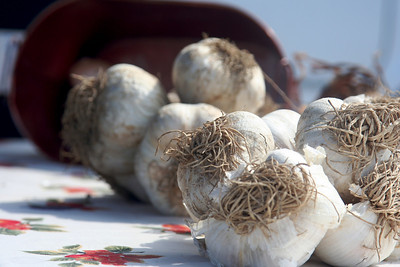 Some HUGE garlic (no, really - about the size of your fist!)