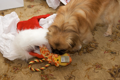 """Abby """"opens"""" her stocking"""