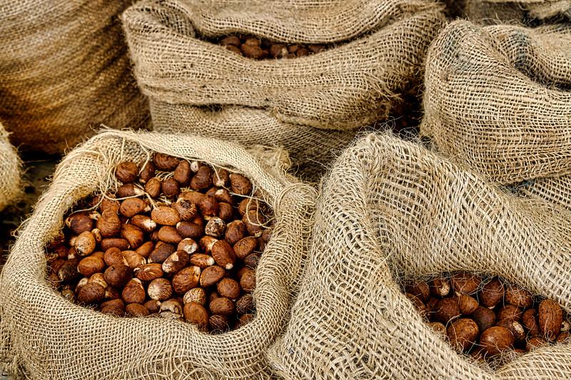 Dried Tagua nuts