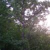 2008-07-04_19-05-54