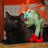 Murloc and Cat